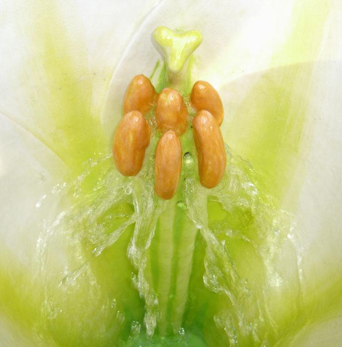 http://www.clarkmade.com/images%20urinals/Easter%20Lily%20flush.jpg